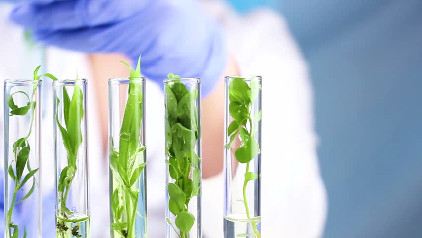 Scientist work with plant in test tubes in laboratory. Close up. | Shutterstock HD Video #1012436420