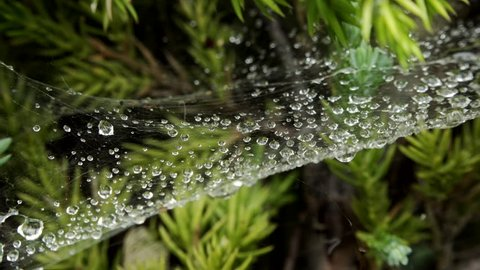 Water drops on a Spiders Cobweb macro close up stock footage