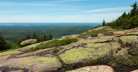 Alpine Flowers on Cadillac Mountain in Acadia National Park, Maine