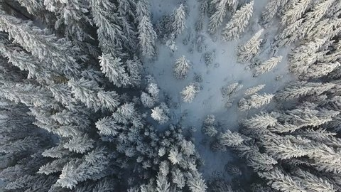 Snow covered trees from above in beautiful aerial perspective