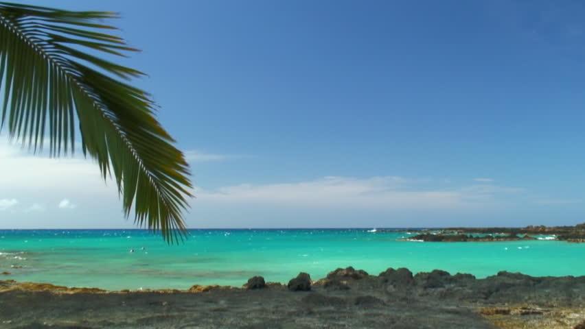 Palm Leaf Rustles Over Azure Water | Shutterstock HD Video #1012716830