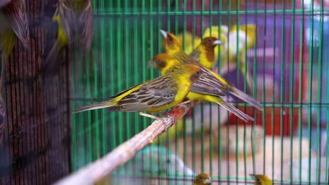 A shot of a bird inside a cage in a market being sold.
