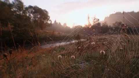 Romantic dawn view Spider web Dew on web Mountain landscape Coltsfoot flowers Close up Beginning of the day Peaceful silence of nature