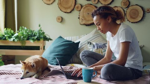 Modern African American girl is using laptop and drinking coffee sitting on bed with cute puppy relaxing at home. Technology, domestic animals and people concept.