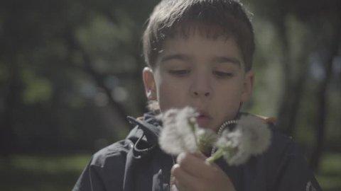 Little boy blowing dandelion in the park.High speed camera, slow motion