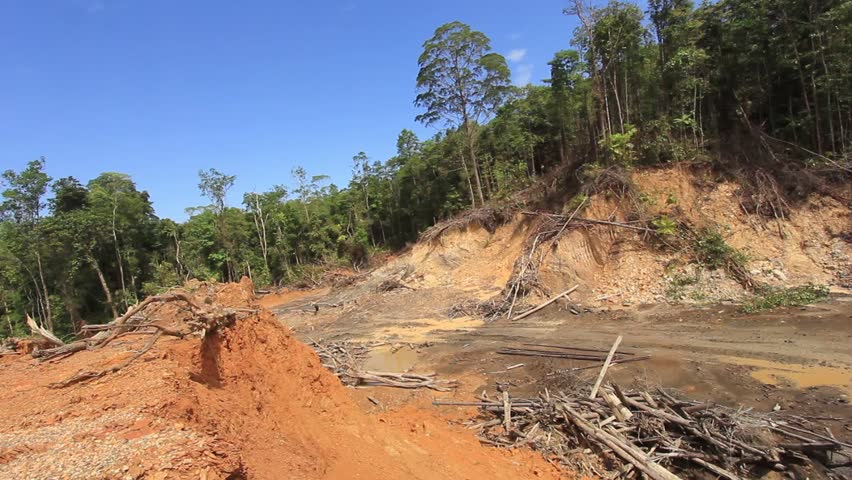 characteristics destruction and protection of rain forests The plants are adapted to collecting minerals from the air and from rain destruction of rainforests must take was under protection in 1996 12% of the.