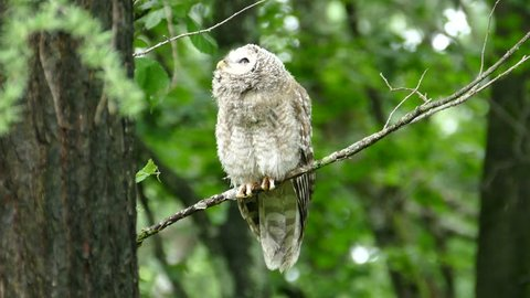 Owl owls who wake up from sleep and ask around