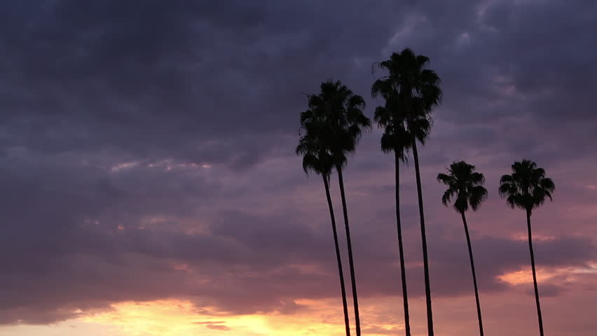 Real time, low angle, long shot of palm trees blowing in a gentle breeze silhouetted by colorful dark purple, pink, ultra violet and bright yellow sunset clouds on the horizon in Arcadia, California   Shutterstock HD Video #1013502590