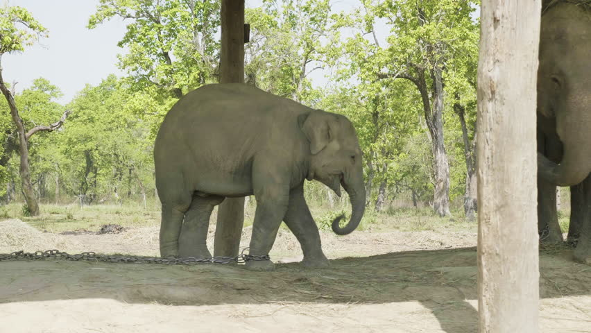 Baby Elephant Reaches Out to Stock Footage Video (100% Royalty-free)  1013735300 | Shutterstock