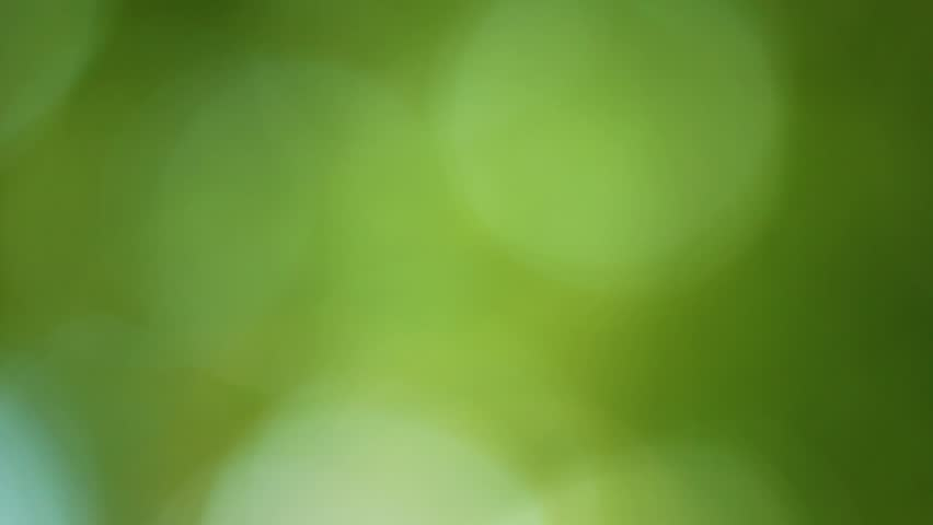 Abstract blur video footage of big round bokeh of real trees isolated at bright blue sky background.   Shutterstock HD Video #1013748530