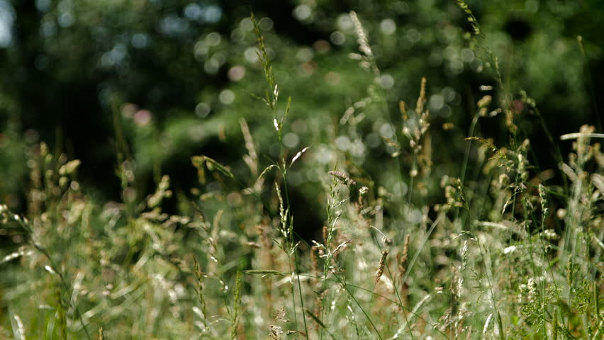 Long reeds and other plants blow in the wind and breeze in slow motion from England