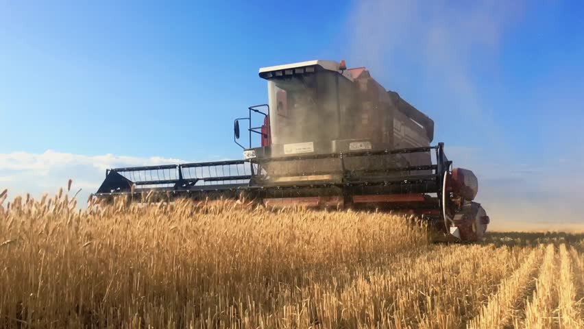 Combine Harvester Gathers the Wheat Stock Footage Video (100 ...