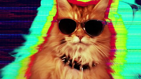 beautiful cool disco cat with sunglasses
