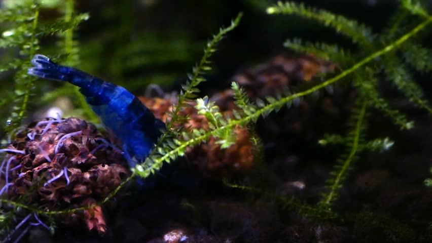 Worms in the aquarium. Nematodes.