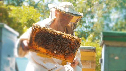 beekeeper holding a honeycomb full of bees. Beekeeper inspecting honeycomb frame at apiary. Beekeeping concept slow motion video. beekeeper lifestyle holding a honeycomb full of bees. Beekeeper