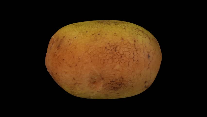 potato tuber lab essay Osmosis potato lab report - we write custom college essay writing briana johnson biology 1500 lab report - osmosis ad diffusion i abstract ii the objective of this lab is to measure the water potential of potato tuber tissues.