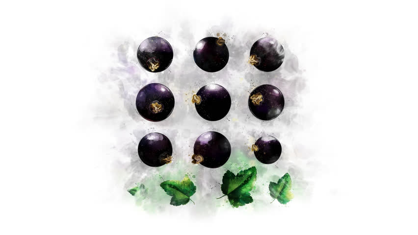 Blackcurrant drawing animation