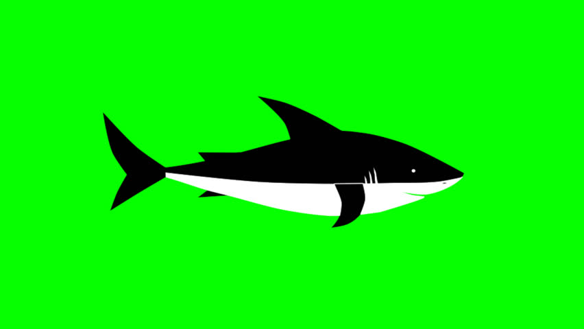 shark, fish, transition, swimming school of fish shark, #1014189410