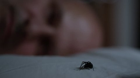 Man sleeps as Black Widow Spider crawls across his pillow leaving him unaware.