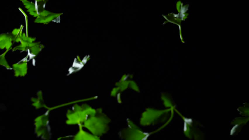 Parsley on black background. Frame. Healthy eating concept. Slow motion