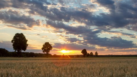 4k timelapse landscape with sunset sky over oat fields in Poland. 3840x2160, high quality.