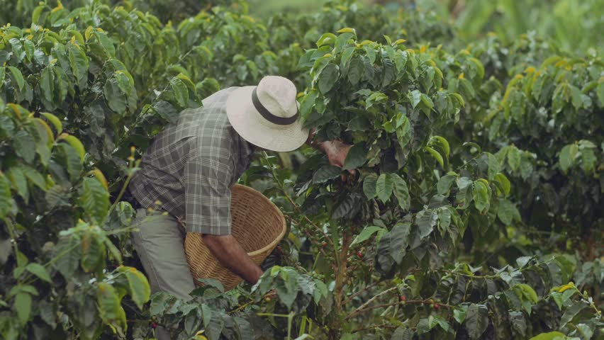 Coffee Farmer Quindio Colombia 07