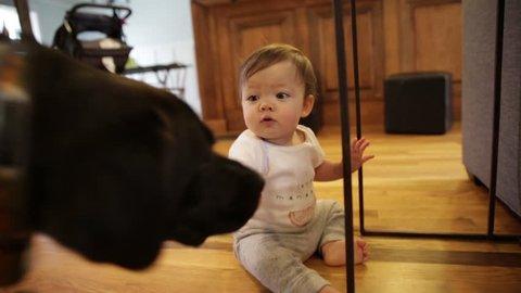 Sweet Dog and Little Baby Playing on Hardwood Floor