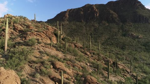 Drone footage of a cactus forest in a desert mountain pass.  Includes rising/panning motion to the top of a hill revealing a city in the distance. Shows iconic saguaro cactus on red rock mountains.
