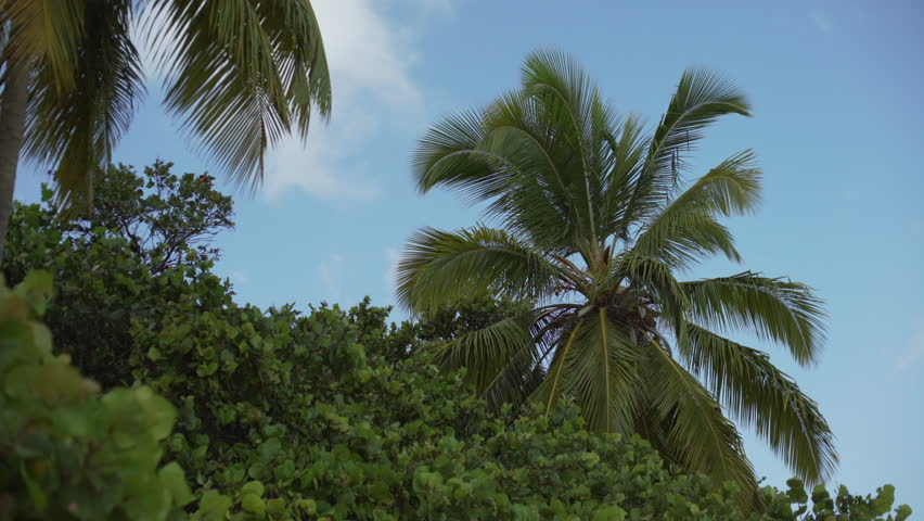 Tropical green screen background Footage #page 5   Stock Clips