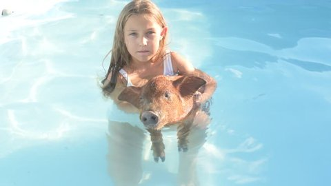 Young girl in bathing suit is swimming in clear, blue water of pool with red pig of Duroc breed. 2019 year of yellow pig. Concept of friendship between man and animals respect for nature