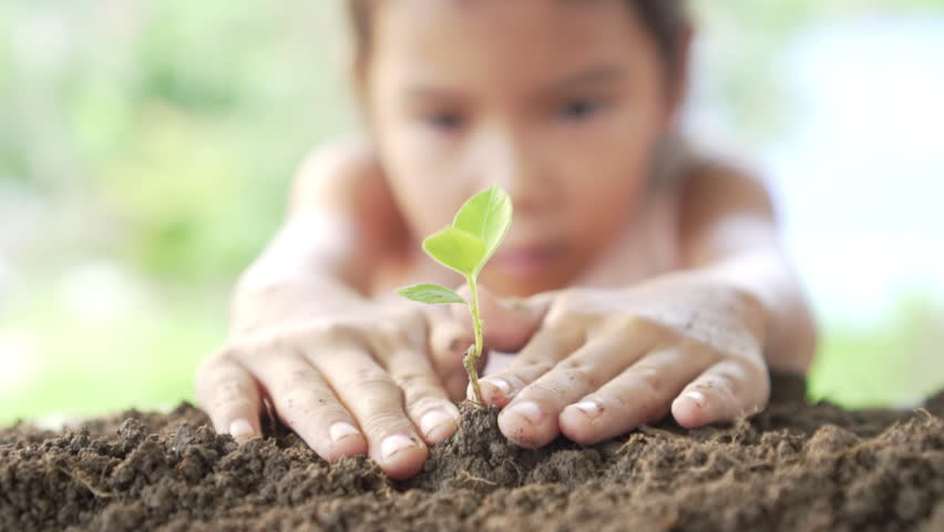 Close up of little girl hands was carrying of new seedlings to be planting into the soil. Slow motion | Shutterstock HD Video #1015170910