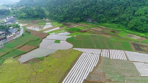 Aerial view, green rice and vegetable fields in poor village in China, Asia. Terraced rice  & field farm in the mountain & rural village with workers. Traditional agriculture & sustainable development