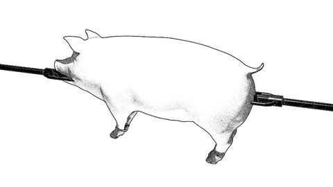 Pig on the spit roast