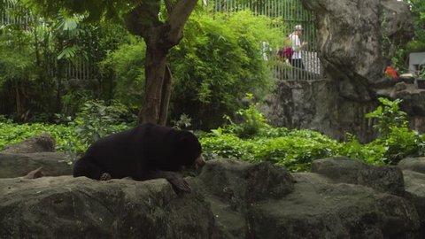 Malayan sun bear in the zoo