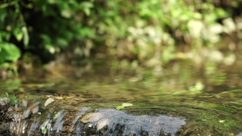 Dragonflies in flight above water. Creek or mountain stream on summer day blue river butterflies fly over water stream | Shutterstock HD Video #1015593670