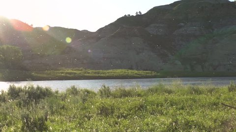 Super slow motion of cottonwood cotton floating over river in breaks at sunset