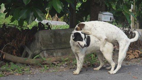 Mating of dog.,