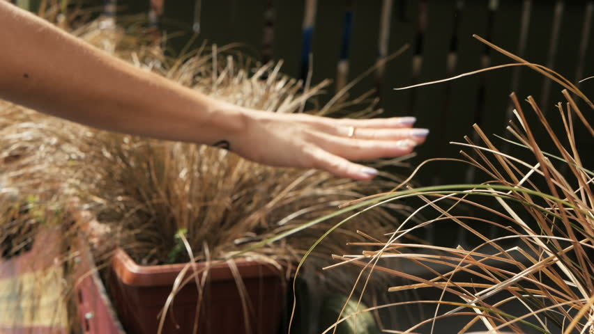 Close-Up Of A Girl's Hand touch Grass on street, nature in town | Shutterstock HD Video #1016053300