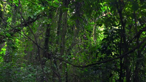 Panoramic view of branches and foliage of exotic trees, shrubs. Scenery with lush vegetation in tropical rainforest. Dense jungle thicket and daylight breaking through it. Luxuriant flora of tropics.