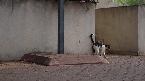 Cat In The Street Urban