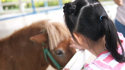 Girl touching pony horse in farm.