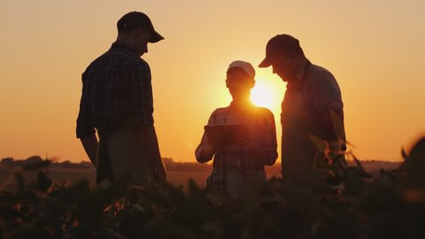 A group of farmers are discussing in the field, using a tablet. Two men and one woman. Team work in agribusiness