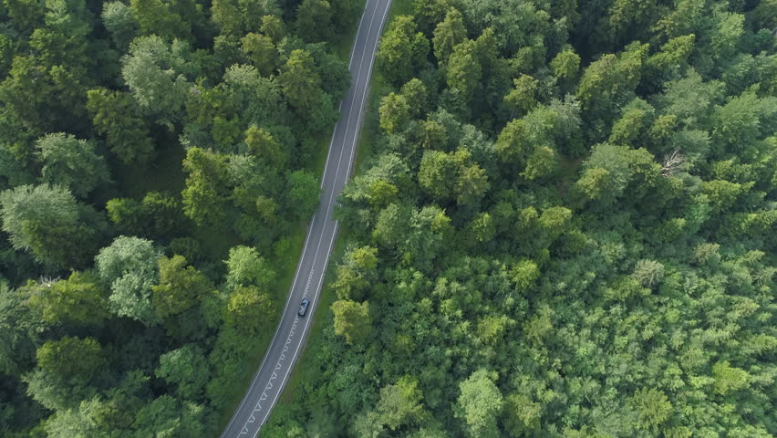 AERIAL, TOP DOWN: Dark colored car driving down an asphalt road crossing the vast forest on a sunny summer day. People on relaxing drive through the idyllic woods in picturesque Slovenian countryside.