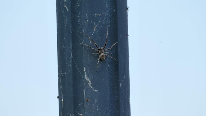 big spider moving upwards. closeup. CH Switzerland. 13th Sept.2018