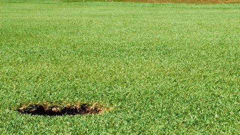 Close up shot of golf putt on beautiful golf course - ball drops into hole on green