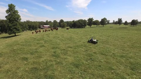 Aerial view of a farmer on a John Deere 4 wheeler chasing Hereford cattle with red barn in the background.