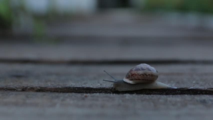 The Snail Crawls Slime