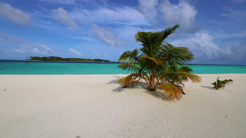 Maldives sandy beach with palm trees. Video in motion. Tropical island. | Shutterstock HD Video #1017064990