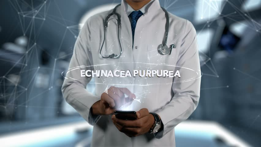 ECHINACEA PURPUREA - Male Doctor With Mobile Phone Opens and Touches Hologram Active Ingrident of Medicine