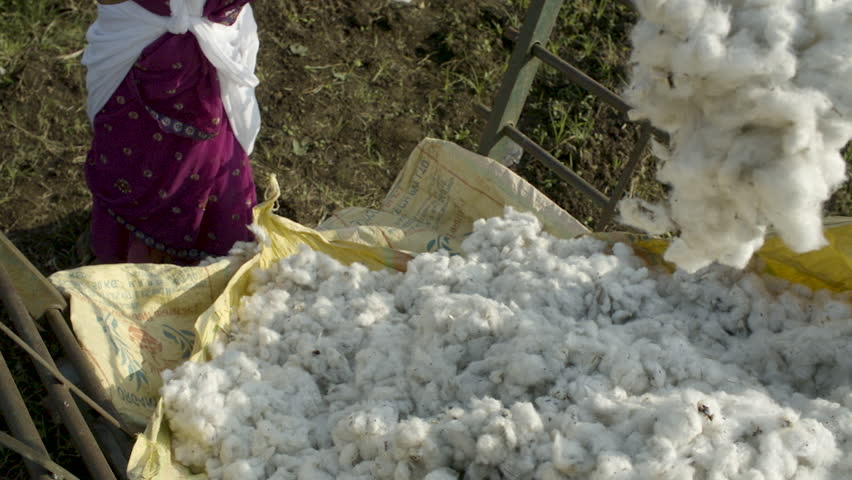 Organic farm, farmers throwing harvested cotton in a pile in slow motion, cotton floats through air. | Shutterstock HD Video #1017163210